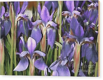 Wood Print featuring the photograph Iris Fantasy by Benanne Stiens