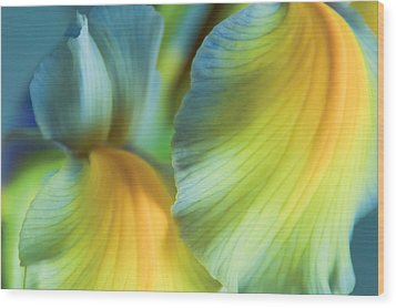 Iris Fantasy Wood Print