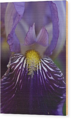 Iris Wood Print by Heidi Poulin
