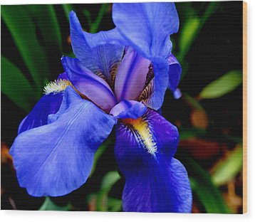 Iris II Wood Print by James Granberry