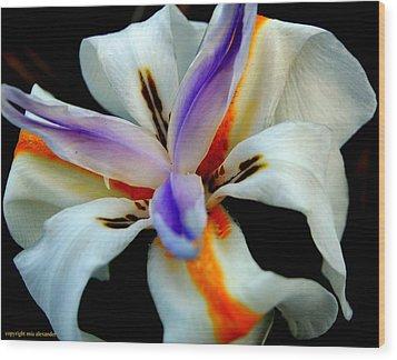 Iris IIi Wood Print