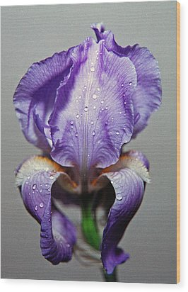 Iris In The Rain Wood Print by Paul  Trunk