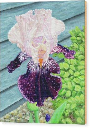 Iris In The Spring Rain Wood Print