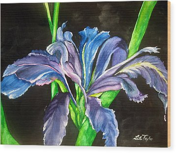 Iris Wood Print by Lil Taylor