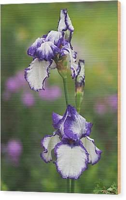 Wood Print featuring the photograph Iris Loop The Loop  by Rona Black