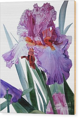 Watercolor Of A Tall Bearded Iris In Pink, Lilac And Red I Call Iris Pavarotti Wood Print