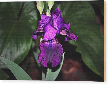 Iris Wood Print by M Ryan