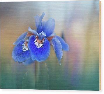 Iris Wood Print by Magda Bognar