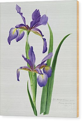 Iris Monspur Wood Print by Anonymous