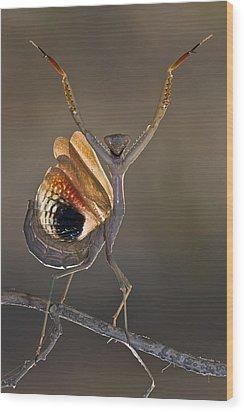 Iris Oratoria Wood Print by Hasan Baglar