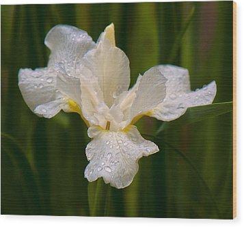 Iris Purity Wood Print by Michael Putnam