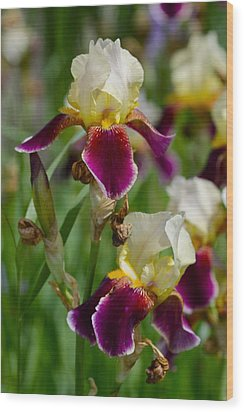 Iris Spring Wood Print by Karon Melillo DeVega