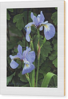 Iris Study Wood Print by Bruce Morrison
