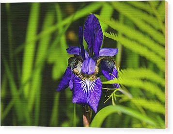Wood Print featuring the photograph Iris Versicolor by Mark Myhaver