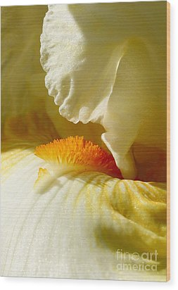 Iris With Touch Of Orange Wood Print by Steve Augustin