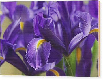 Irises, Close View, California Wood Print by Marc Moritsch