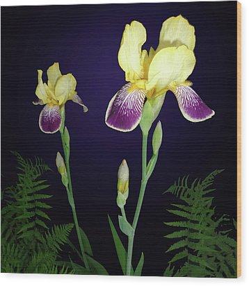 Irises In The Night Garden Wood Print by Tara Hutton
