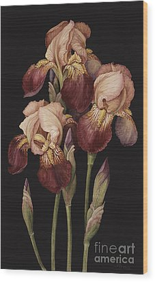 Irises Wood Print by Jenny Barron
