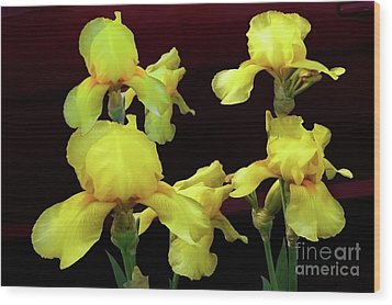 Wood Print featuring the photograph Irises Yellow by Jasna Dragun