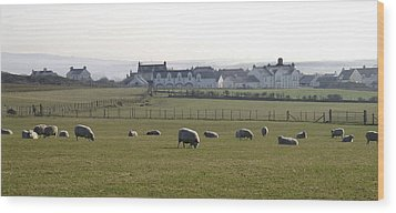 Irish Sheep Farm Wood Print