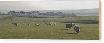 Irish Sheep Farm I Wood Print