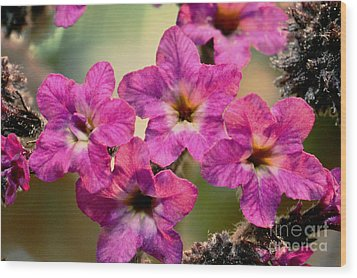 Irridescent Pink Flowers Wood Print by Ryan Kelly