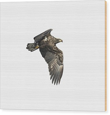 Wood Print featuring the photograph Isolated Eagle 2017-2 by Thomas Young