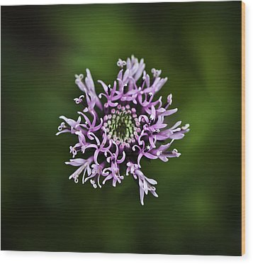 Isolated Flower Wood Print by Jason Moynihan
