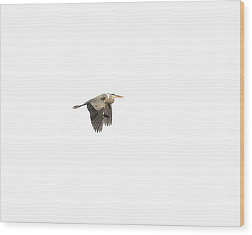 Wood Print featuring the photograph Isolated Great Blue Heron 2015-5 by Thomas Young
