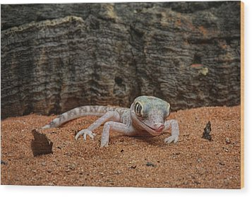 Wood Print featuring the photograph Israeli Sand Gecko - 1 by Nikolyn McDonald
