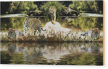 Wood Print featuring the photograph It Must Be Time For A Tiger Nap by Diane Schuster