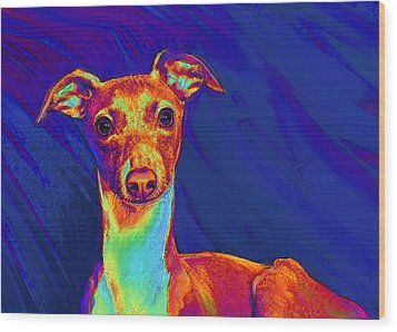 Italian Greyhound  Wood Print