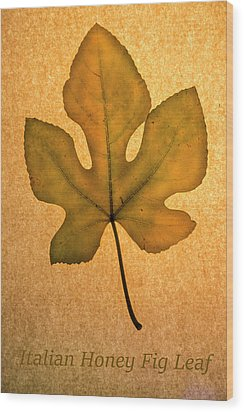 Wood Print featuring the photograph Italian Honey Fig Leaf 4 by Frank Wilson
