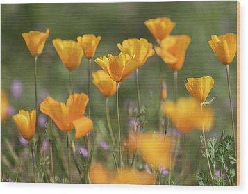 Wood Print featuring the photograph It's A Poppy Thing  by Saija Lehtonen