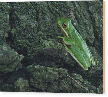 Its Hard To Be Green Wood Print by Douglas Barnett