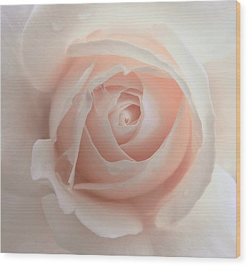 Ivory Peach Pastel Rose Flower Wood Print by Jennie Marie Schell