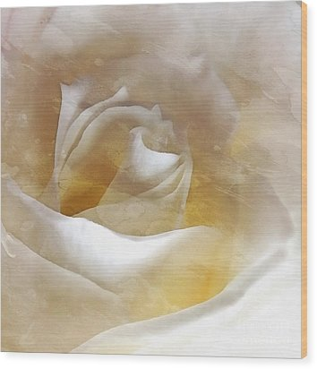 Wood Print featuring the photograph Ivory Rose - An Affair To Remember   by Janine Riley