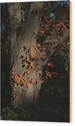Ivy In The Fall Wood Print