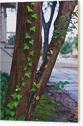 Ivy In Williamsburg Wood Print