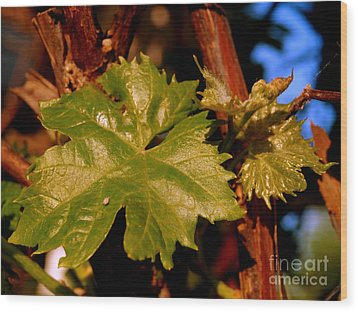Ivy Leaf Wood Print by Michael Canning