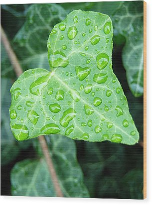 Ivy Leaf Wood Print by Michael Peychich