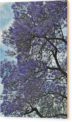 Jacaranda Clouds Wood Print by Gwyn Newcombe