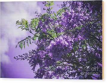 Wood Print featuring the photograph Jacaranda Mimosifolia Kula Maui Hawaii by Sharon Mau