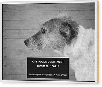 Jack Russell Terrier Mugshot - Dog Art - Black And White Wood Print by SharaLee Art