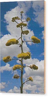 Jacobs Ladder Wood Print by Skip Hunt