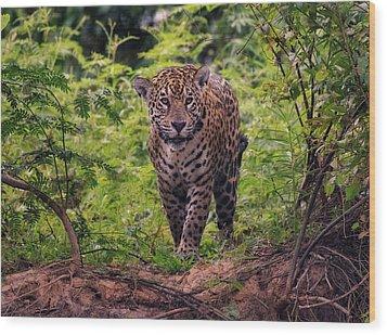 Wood Print featuring the photograph Jaguar      by Wade Aiken