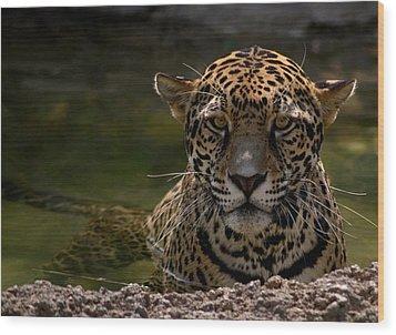 Jaguar In The Water Wood Print by Sandy Keeton