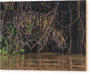 Wood Print featuring the photograph Jaguar In Vines by Wade Aiken