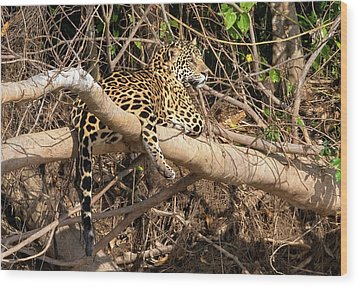 Wood Print featuring the photograph Jaguar In Repose by Wade Aiken