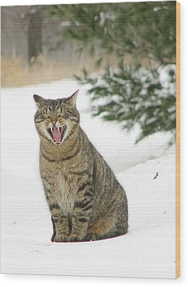Jake In The Snow Wood Print by Laurie With